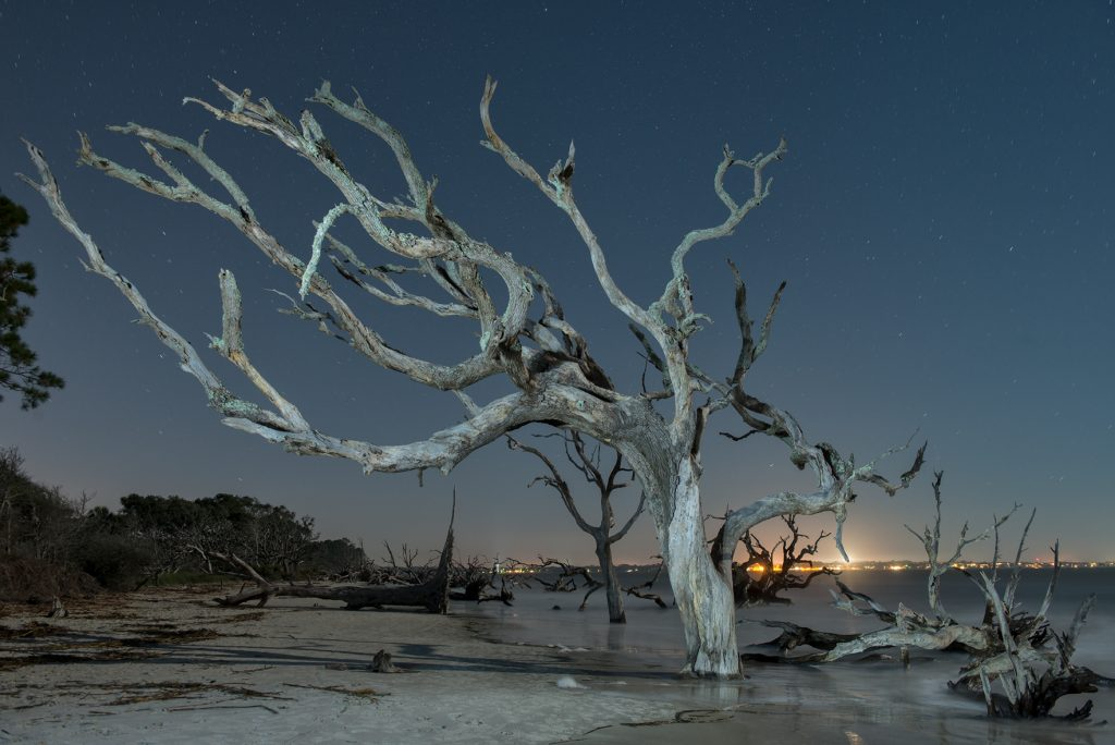 American Nightscapes / Driftwood Beach